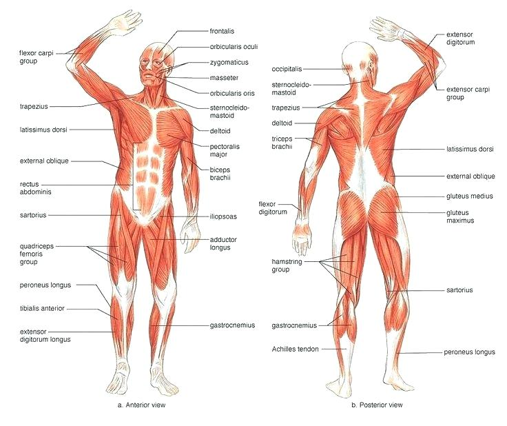 Muscle Injury Assessments and Treatments